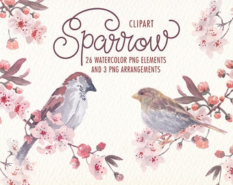 Watercolor Sparrow Bird png clipart images of watercolor Ideal printable posters poster cards stickers Congratulations and more