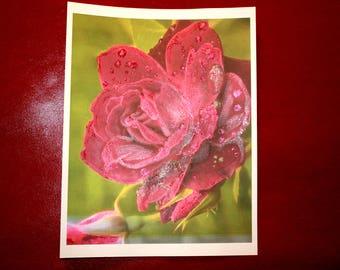 """ART PRINT of Velvety Red Rose 8 1/2""""x 11"""""""