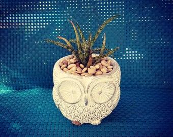 Ceramic Owl planter with succulent