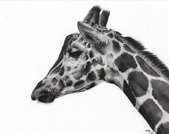 Giraffe - realistic animal portrait made by MagLM using graphite pencils