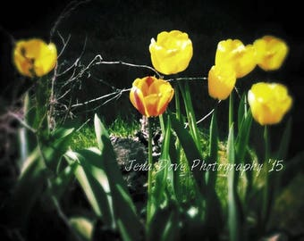 Artistic Photographs- Wall Hangings-Home Decor-Wall Art-Greeting Thank You Get Well Cards- JDP