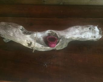 Drift Wood Candle Holder or Display Piece