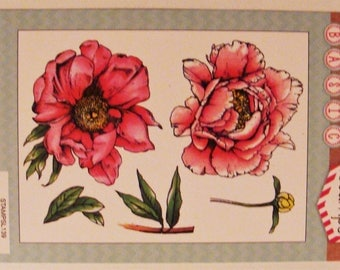 Clear stamps Peony, flowers, leaves and button