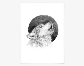 Fine art print - Wolf