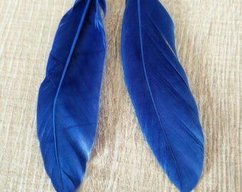 Blue eight centimeters with attached feathers