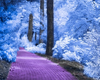 A Garden Path Infrared Photograph