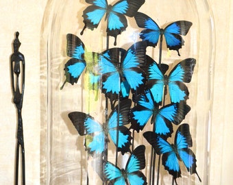 Bell with 10 Papilio ulysses, only to order to take away from our workshop