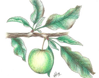 'Apple', watercolour on canson paper