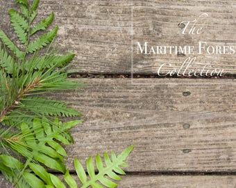 The Maritime Forest Collection 2