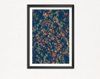 dont see the-poster image-Art print-forest-forrest-wood-tree-green-Christmas tree-nature-tree-fir-Christmas tree