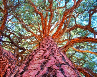 Vibrant Tree at the Grand Canyon - Digital Photography - Instant Download - Colorful Tree Wall Art