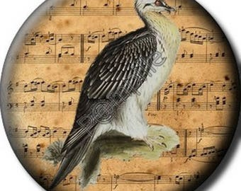 Cabochon resin 25 mm - bird song (760) stick
