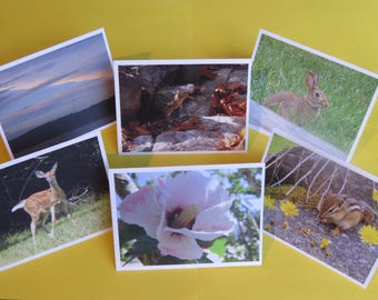 6 Assorted Nature Photography Cards