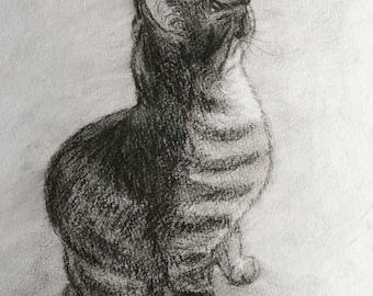 Original charcoal drawing of a cat