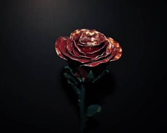 red rose with gold edge