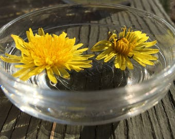 Dandelion Flower Essence #1 / New Moon Beginnings / Solar Eclipse / Vibrational Healing / Vibrational Medicine Remedy / Pisces Gifts
