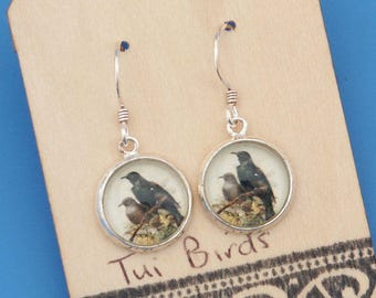 New Zealand Tui birds, vintage art print, Earrings, glass dome art, sterling silver earring wires