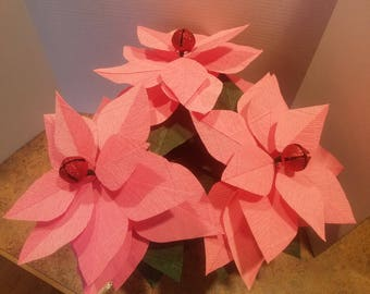 Coral Pink Poinsettia