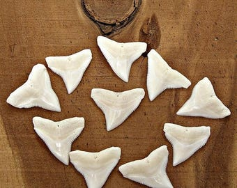 SALE 10 Pc Lots 1 inch 25mm Up Great BULL Sharks Teeth White Upper Jaw Shark Tooth