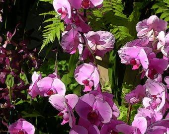 Flowers Botanical Garden Violet Green pop art wall art print on canvas 20X15