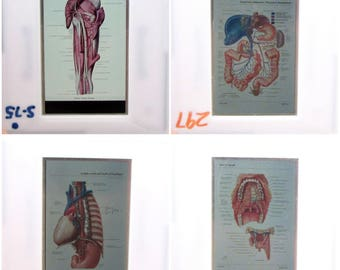 20 Human Anatomy vintage 35mm Photo Slides - Glass Slides - Medical Oddities Illustrations - Macabre