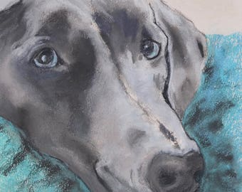 Weimaraner Dog Art Pastel Drawing By Cori Solomon