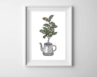 Tea plant watercolour illustration - Tea pot - A4 print -  Kitchen art - Tea lover - Tea lover gift - Plant illustration