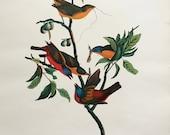 Vintage Print of Painted Finches - 1964 Large Folio Size Audubon Bird Print
