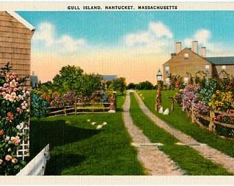 Vintage Nantucket Postcard - Gull Island (Unused)