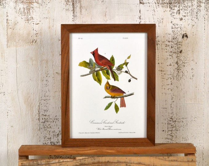 "Framed Audubon Bird Print ""Common Cardinal"" Full Color Reproduction - Solid Natural Walnut Peewee Style - IN STOCK - Same Day Shipping"