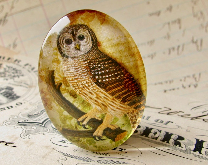 Woodland Owl, Tawny Owl, 40x30mm glass oval cabochon, neutral brown, wisdom bird, handmade in this shop, Bird Illustration collection