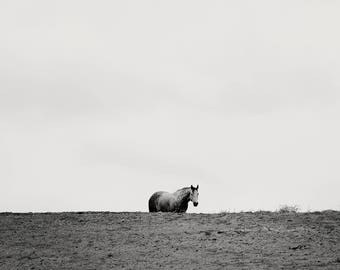 Minimalist Landscape Horse Photograph, Black and White Animal in Landscape Art, Physical Print
