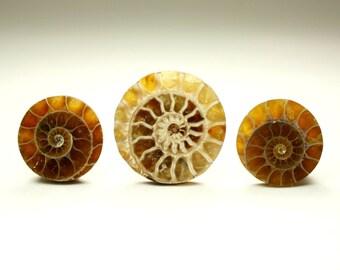 Circular Ammonite Fossil Designer Cabochon Set