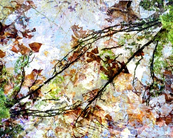 Birch Tree's. Abstract Photography. Art. Nature Art. Home Decor. Photography. Nature Decor. Nature Photography. Digital prints. Digital art.