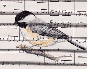 Chickadee Pen, Ink and Colored Pencil on Music,bird art,animal,bird,birdwatcher, music, wildlife,nature,black capped chickadee,bird lover,