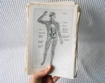 100+ Human Body Plates Skeleton Muscles Pages Vintage ephemera Mixed Pages