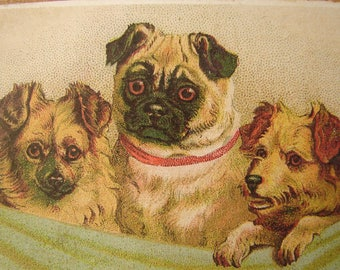 Victorian pets,dogs, puppies, vintage style image,shabby chic,small hanging sign.