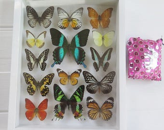 Luxury Set Big Rare Real Mix 14 Butterfly Specimen Swallowtail Papilio Blumei Butterflies Framed Glass Taxidermy Insect Wall Decor Gift