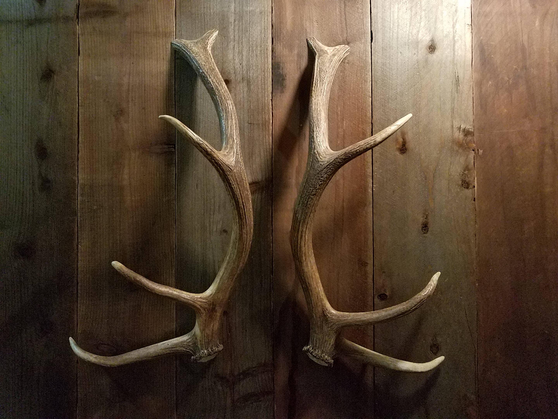 Nice Shed Elk Antler Handle Set Matched For Door Pulls