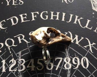 Resin cast partridge skull ring Plain