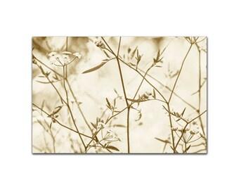 Botanical Zen Art Print Photograph Sepia Tones Art Print Wall Art Sumi-e Photo Print Giclee Botanical Contemporary Style