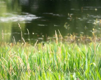 Grass at the Lake