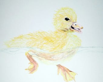 Duckling Colored Pencil Drawing