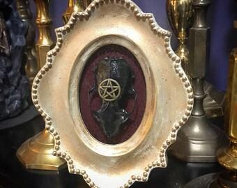 Framed Mink Skull