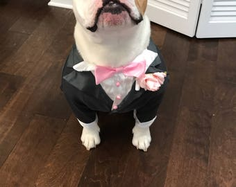Dog Tuxedo, look how handsome Maverick looks in his tux, he is going to look so cool walking down the isle with his human mummy