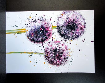 Alliums ...by Suzanne Patterson. A4 signed art print from one of my original paintings.