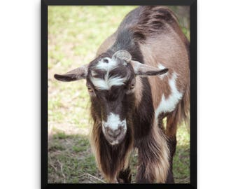 Framed photo paper poster - Red Silo Original Art - Billy Goat Gruff