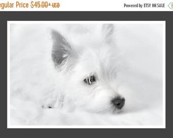 ON SALE Black and White Dog Photography - West Highland Terrier  - Westie Puppy- Puppy Print - Baby Animal Print - White Dog Print