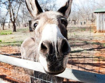 Funny Donkey Print  - Great for any wall decor !