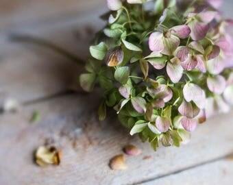 Soft Dreamy Still Life Floral Photo, Dried Hydrangeas Print, Fine Art Photo, Bedroom Wall Art, Bathroom Wall Decor, Green Purple Pink Colors